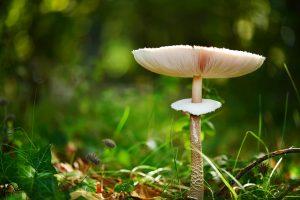 fungus-489852_1920